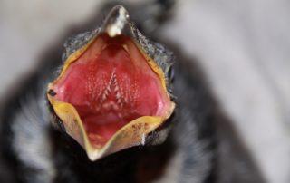 Ei Gefieder Vogel