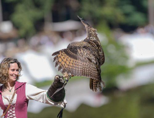 Flugschau zum Mittelalterfest im Wildpark Schwarze Berge 2014